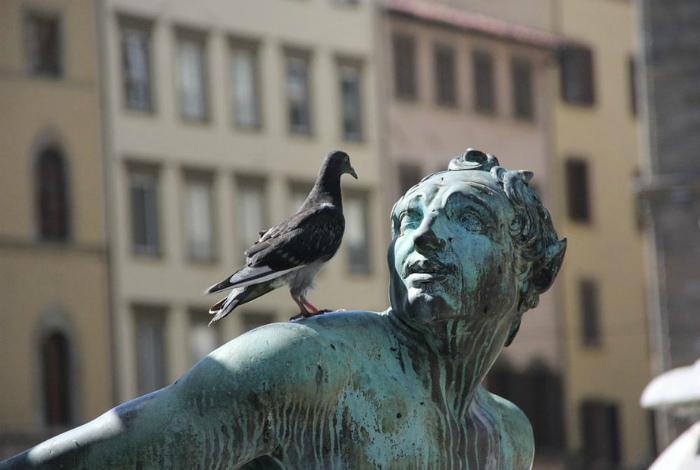 Нельзя кормить голубей в Италии. | Фото: www.klerk.ru.