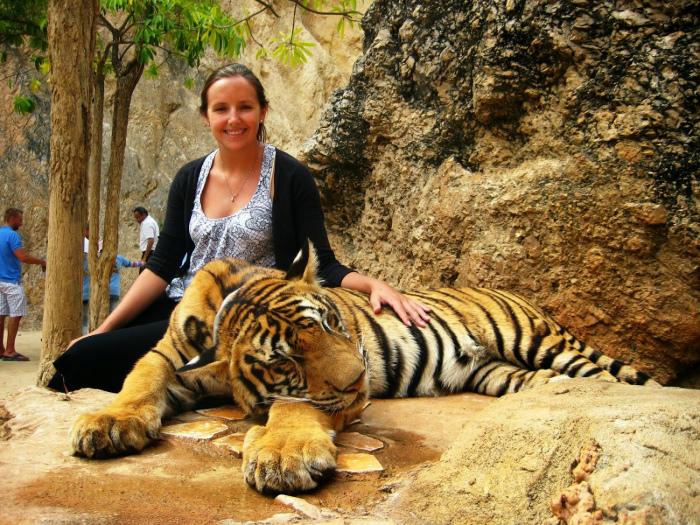 Запрет на селфи с тиграми. | Фото: Yousense.info.