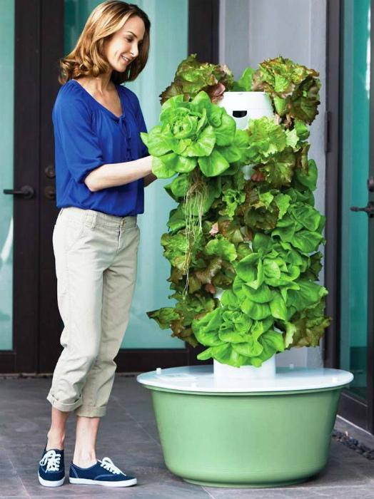Вертикальный сад с системой самополива.