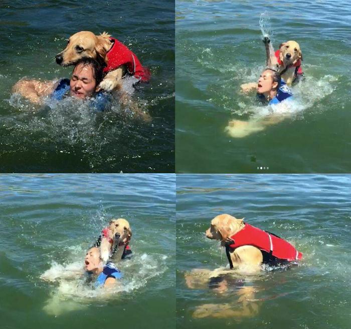 Первый случай утопления человека собакой. | Фото: Reddit.