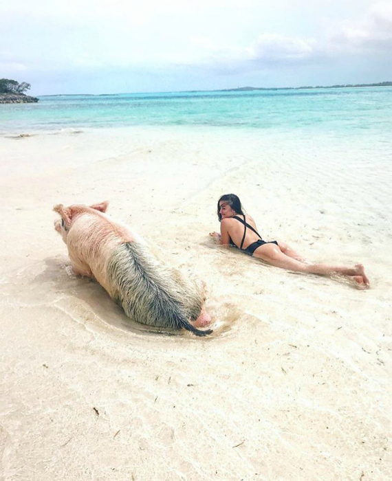 Подруга свинка.