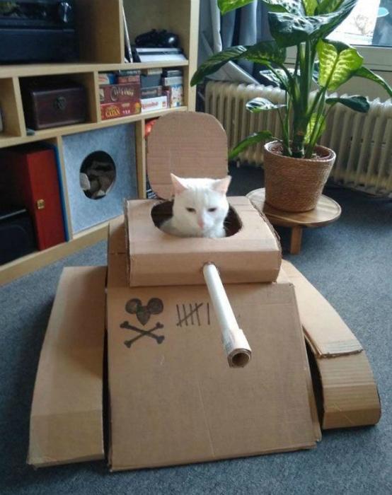 Танк для кота из картона.   Фото: Infodays.