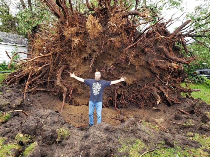 Домик, который был за деревом. | Фото: Reddit.
