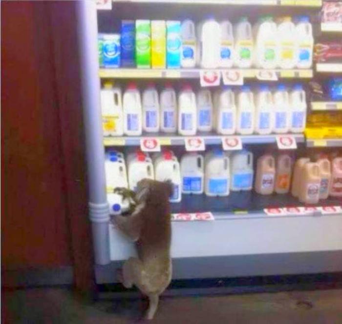 Все ходят в магазины! | Фото: Бугага.