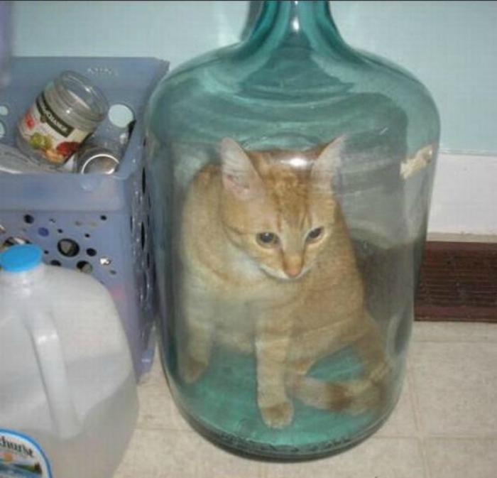 Кот в ловушке.