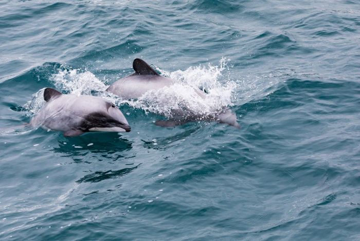 Дельфины у побережья. | Фото: Tierlexikon.