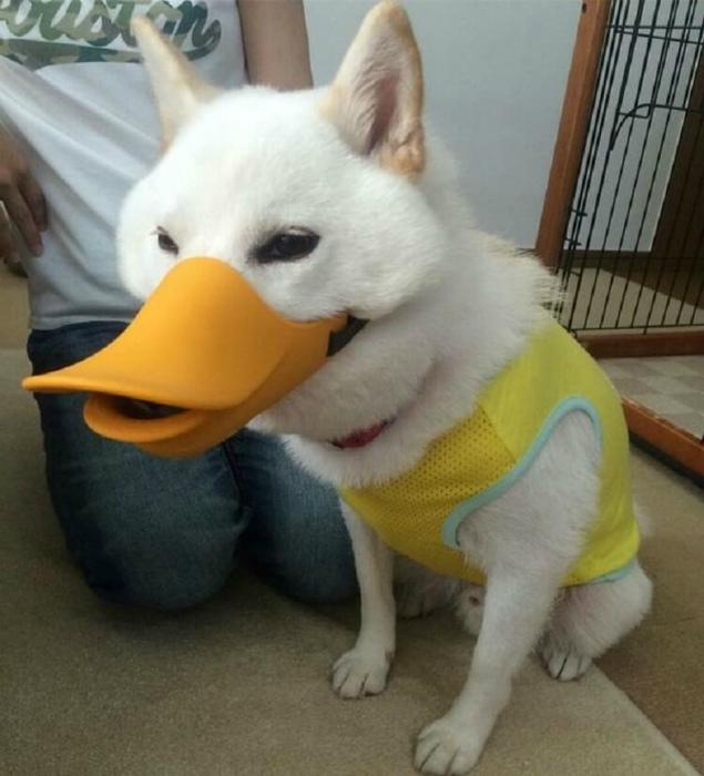 Собака любителя уток.
