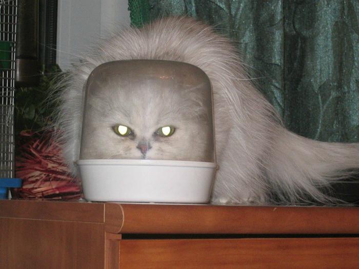 Зловещий котейка.