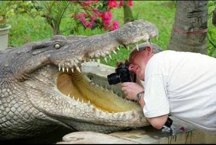 Изучаем крокодила. | Фото: BrainParking.com.