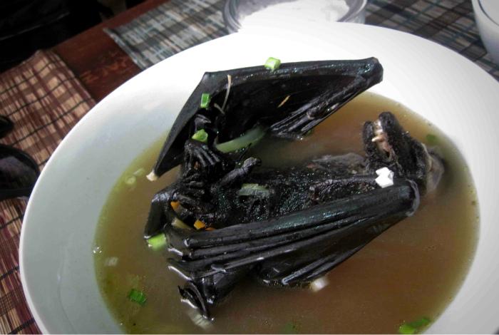 Суп из летучей мыши.