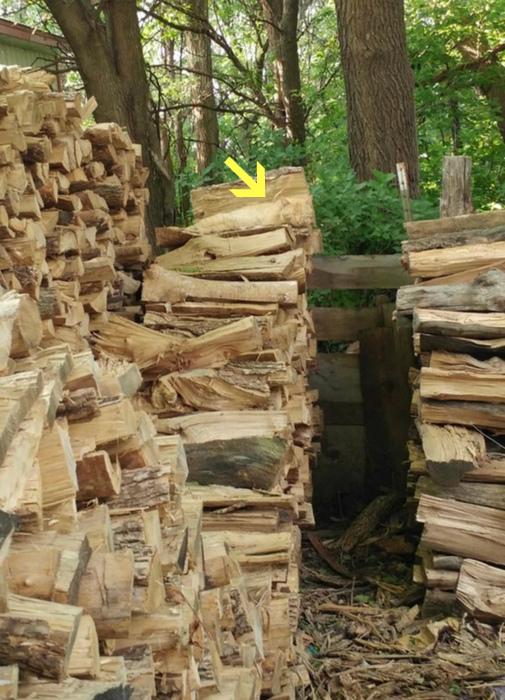 Особый подвид - дровяной кот.