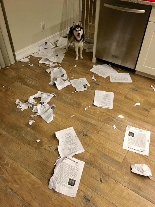Домашнее задание съела собака.