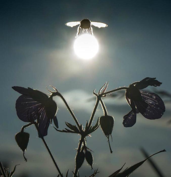 Солнце в лапках жука.