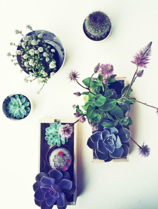 Горшки с цветами, прикрепленные к стене горизонтально.