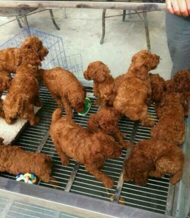 Именно так видят собак в Корее. | Фото: Bligz.