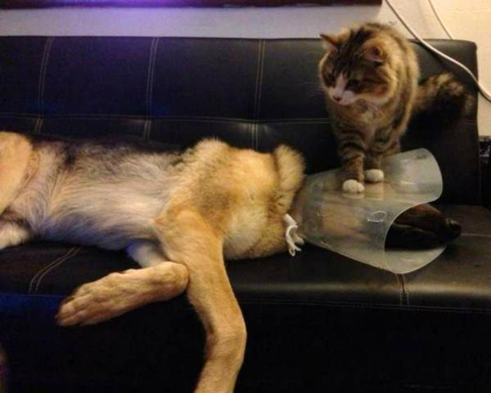Котик использует ситуацию по-полной.