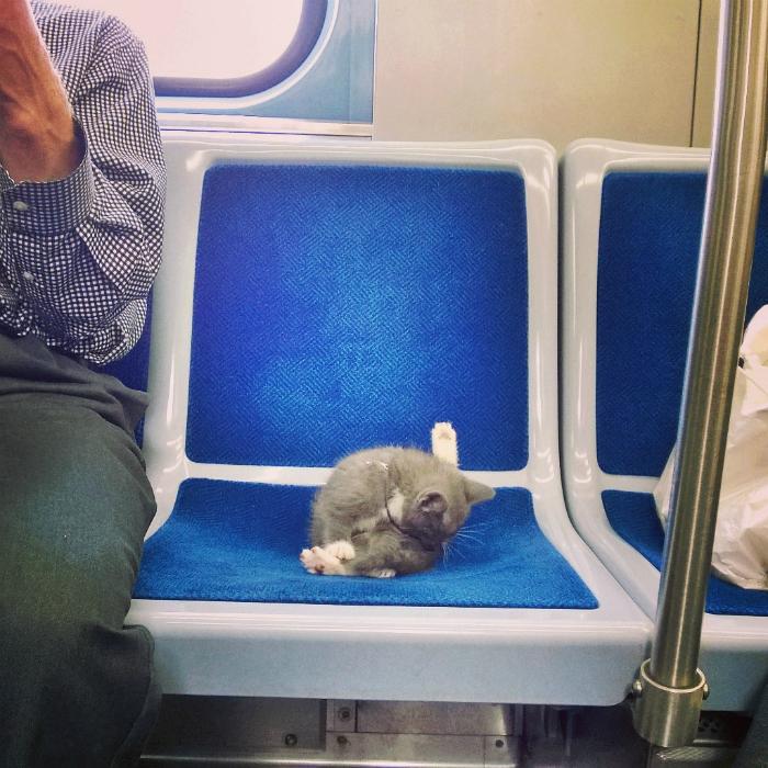 Усатый пассажир.
