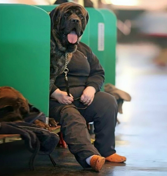 Собачья морда. | Фото: newsd.co.