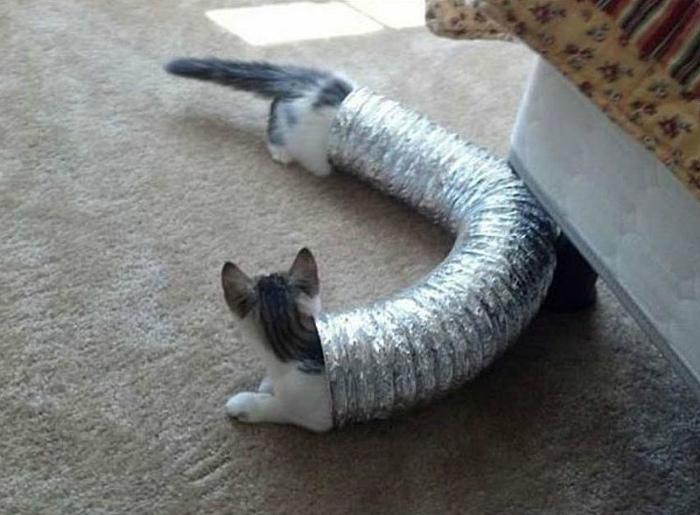 Нестандартный котик.