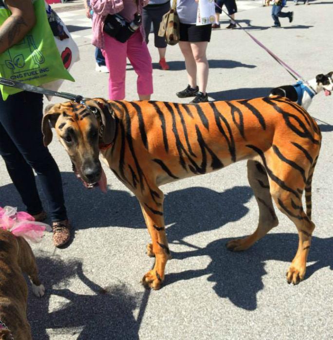 Волшебное перевоплощение собаки. | Фото: BlogNews.am.