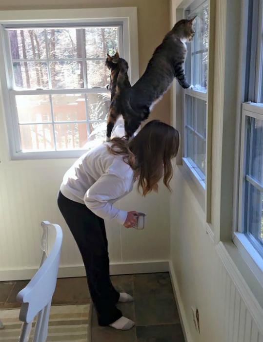 Абсолютно все коты уверены, что люди живут у них, а не наоборот! | Фото: Bored Panda.