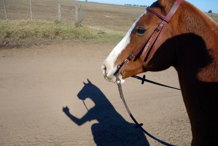Селфи коня. | Фото: JoyReactor.