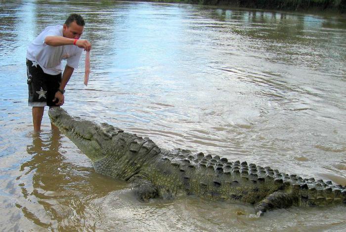 Игры с крокодильчиком.