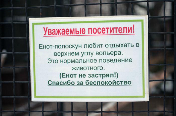 «Посетители зоопарка, не волнуйтесь! Енот не застрял!»