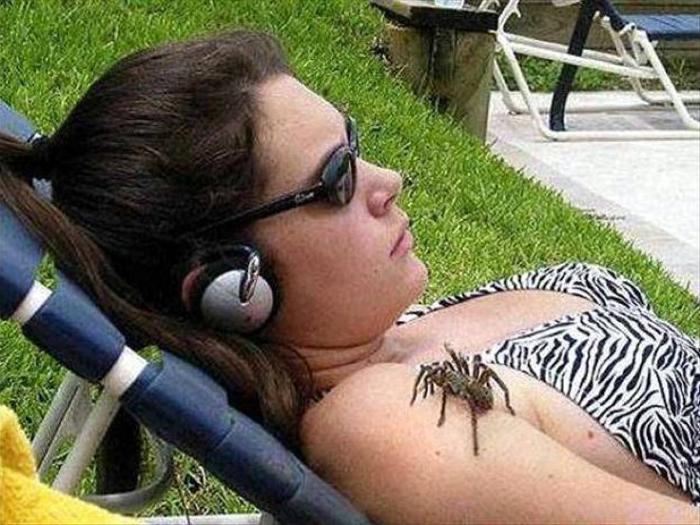 Огромный паук.
