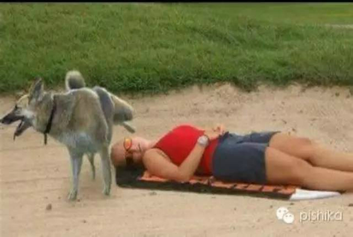 Этот пес тщательно следит за порядком на пляже и отмечает всех новых отдыхающих.