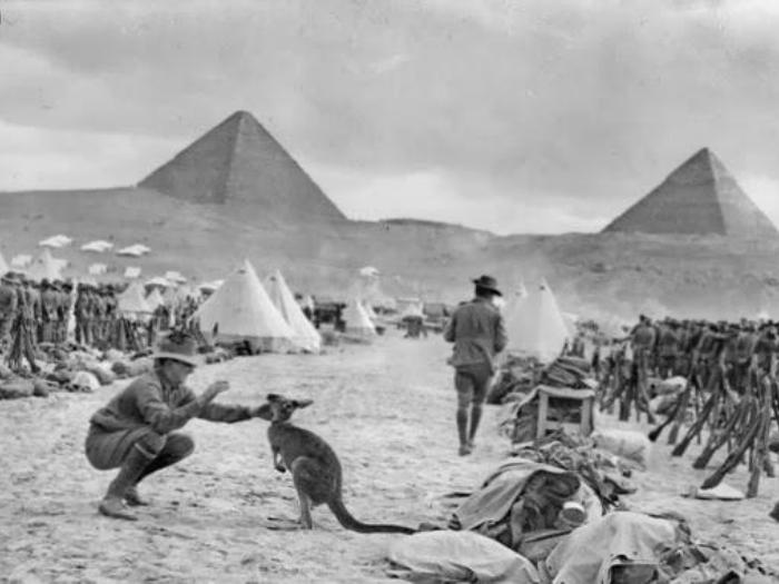 Австралийский солдат, играющий с кенгуру, который был их полковым талисманом.