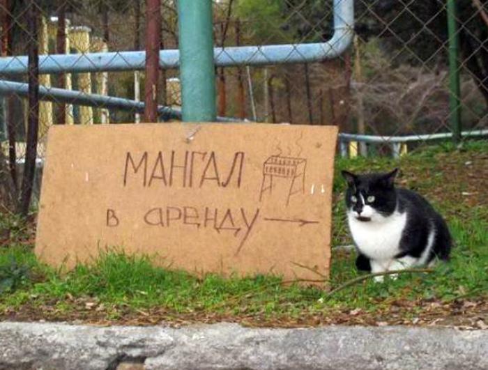 Очевидно же, что это не мангал, а кот! | Фото: Новости N.