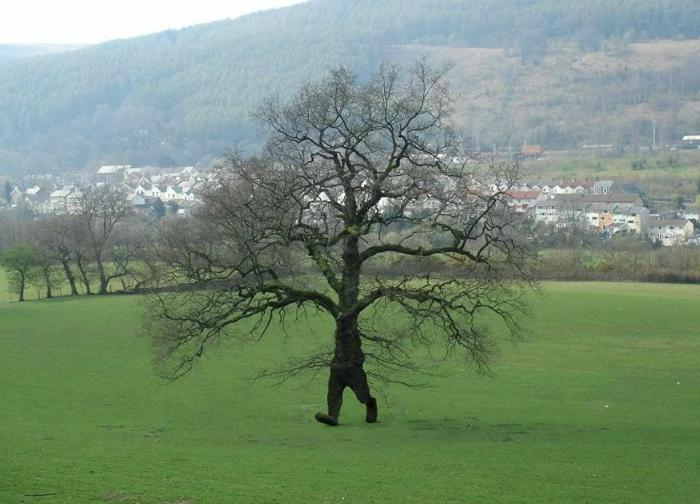 Ловите дерево, а то сбежит! | Фото: Scoopnest.