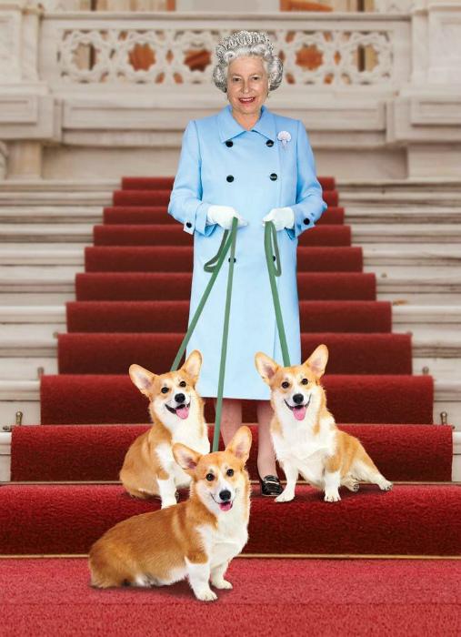 Жизнь королевских собак.