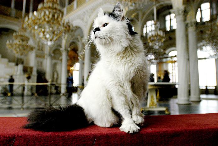 Эрмитаж охраняют коты.