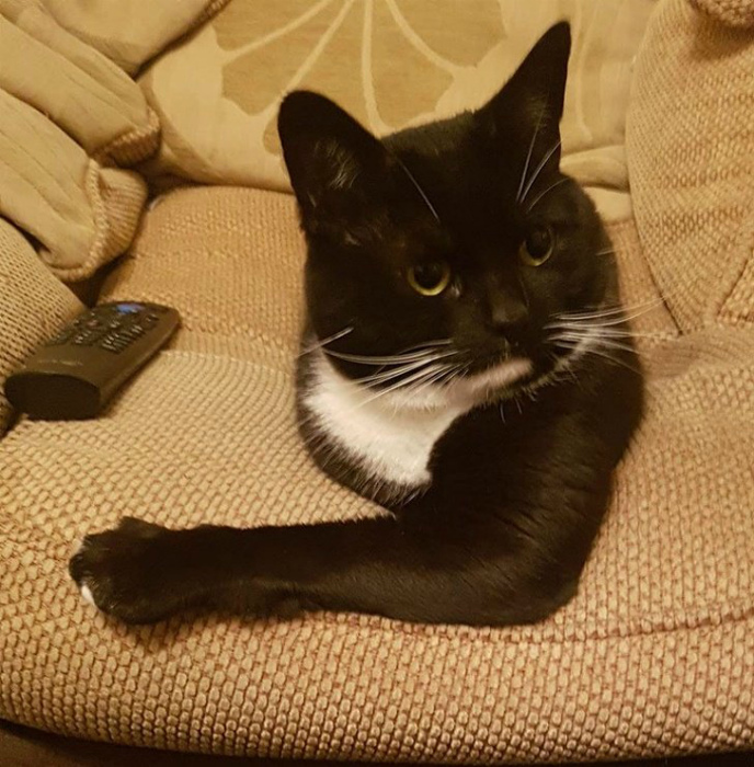 Уютное гнездышко для кота. | Фото: spaly.net.