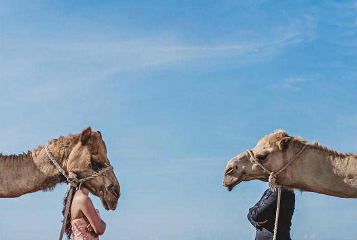 Два верблюда.