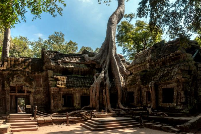 Дерево и храм.