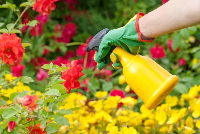 Защита растений от грибка.