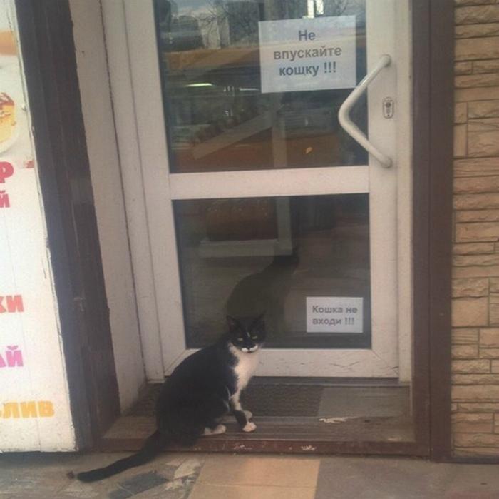 Кошка-рецидивистка на пороге.