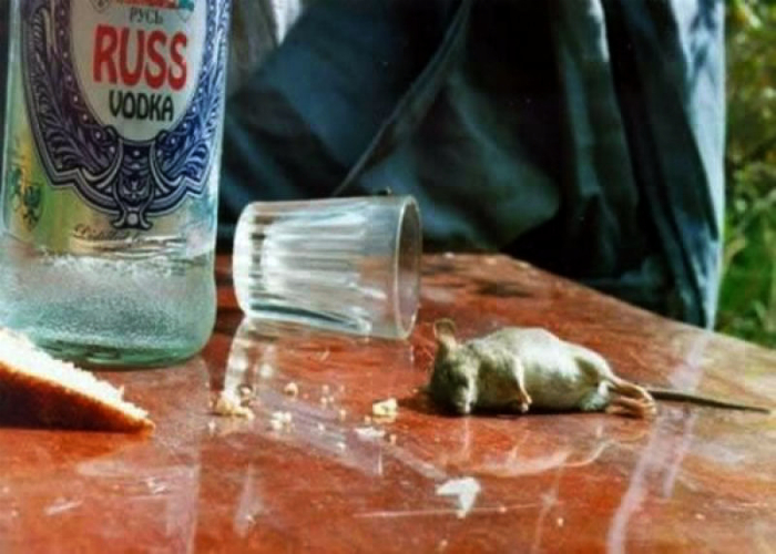 Пьяная мышь.
