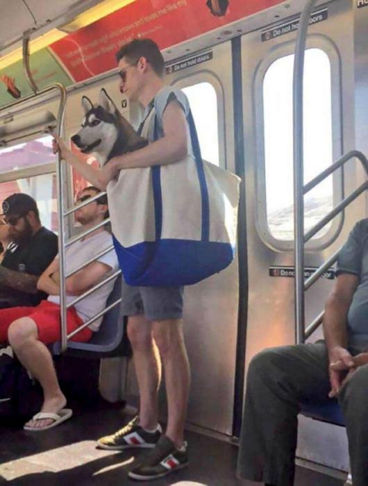 А жители города, в свою очередь, доказали что любую собаку можно поместить в сумку.
