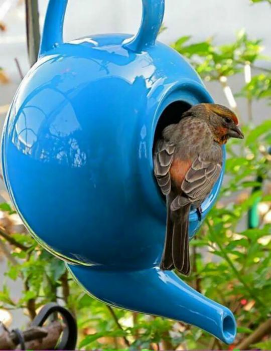 Кормушка для птиц из заварника.