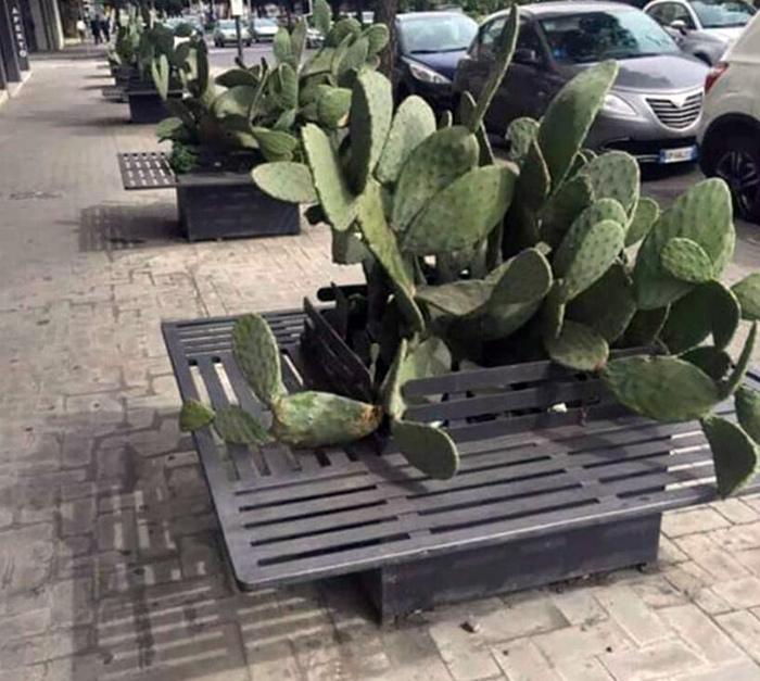 А что за «добрый» человек посадил возле скамейки кактус?| Фото: No One Cares.