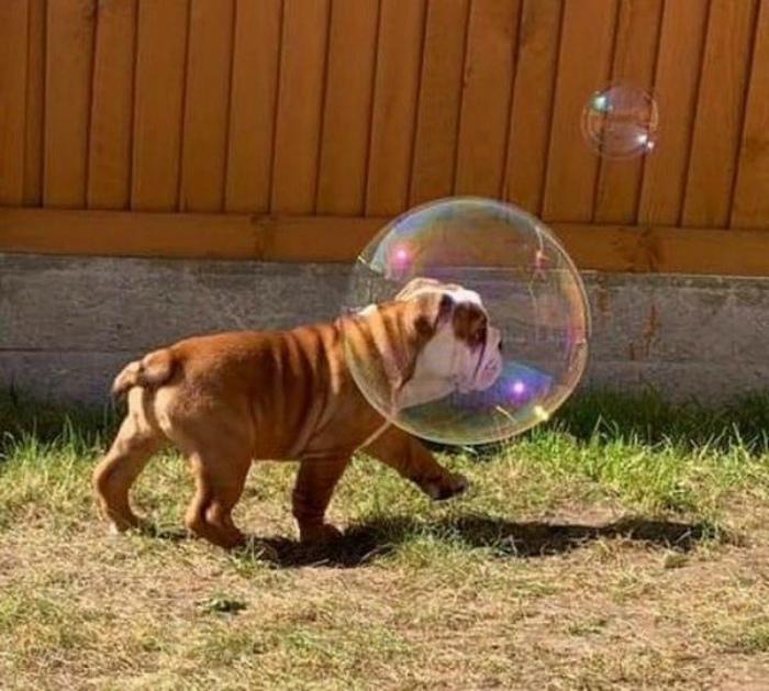 Собачка в пузыре.| Фото: klikabol.com.