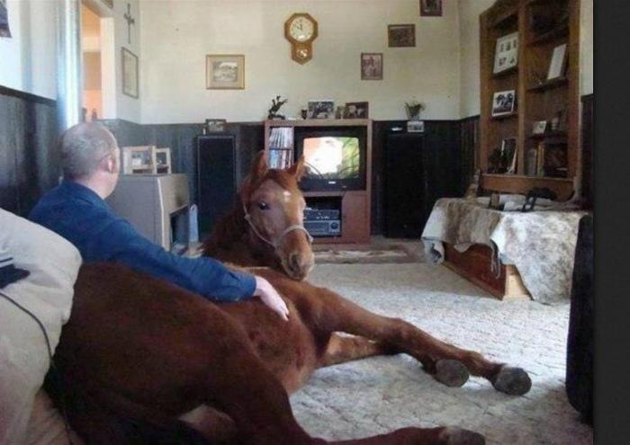 Очень домашнее животное. | Фото: Blog de Humor.