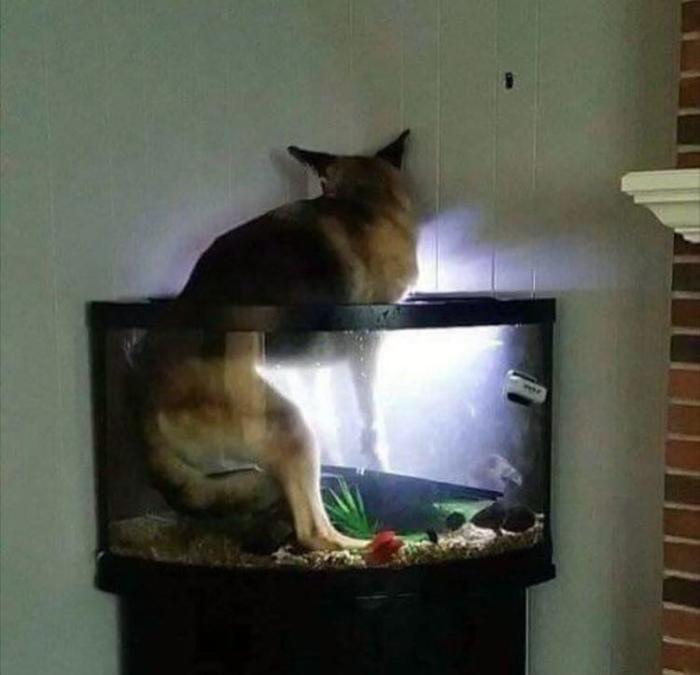 По мнению Novate.ru, с собакой что-то не так... | Фото: eBaum's World.