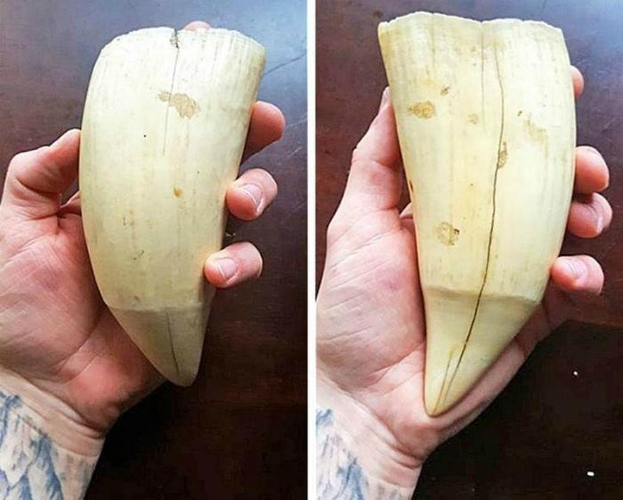 Зуб кита.