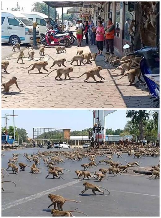 Таиланд и обезьяны. | Фото: Vinegret.