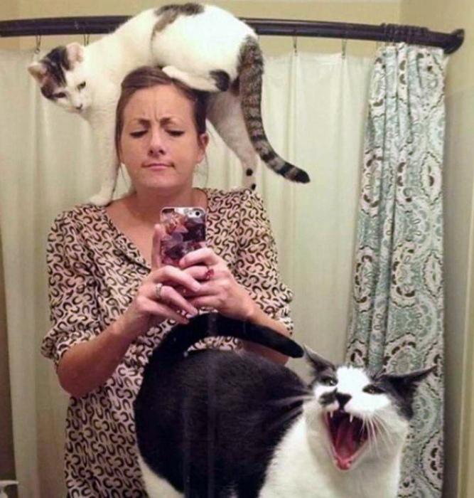 Какое фото без котов?